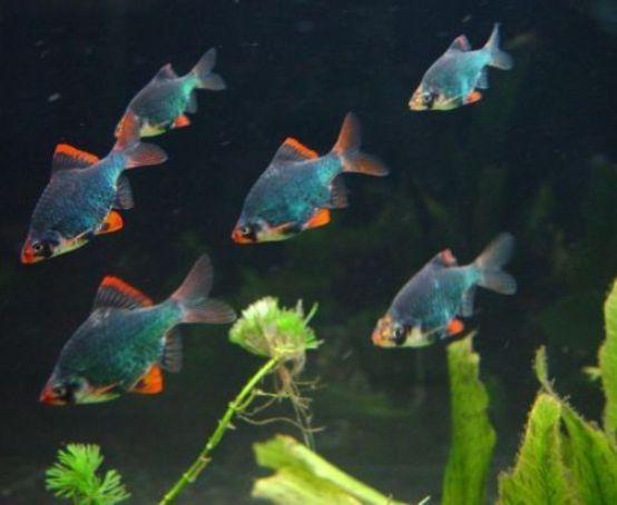 Pin By Eman Abouelseoud On Aquarium Eau Douce Tropical Fish Aquarium Fish Tank Tropical Fish Aquarium