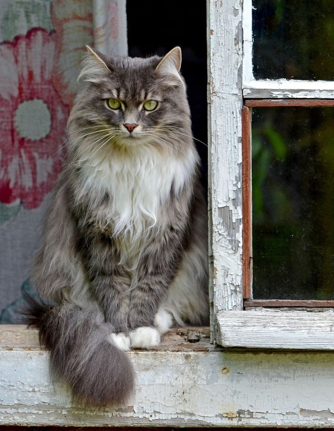 Kitty In Window Waiting For The Kibbles Bits Owner Promised He D Bring Didn T Have Long To Wait S Hurrying Up Walk As