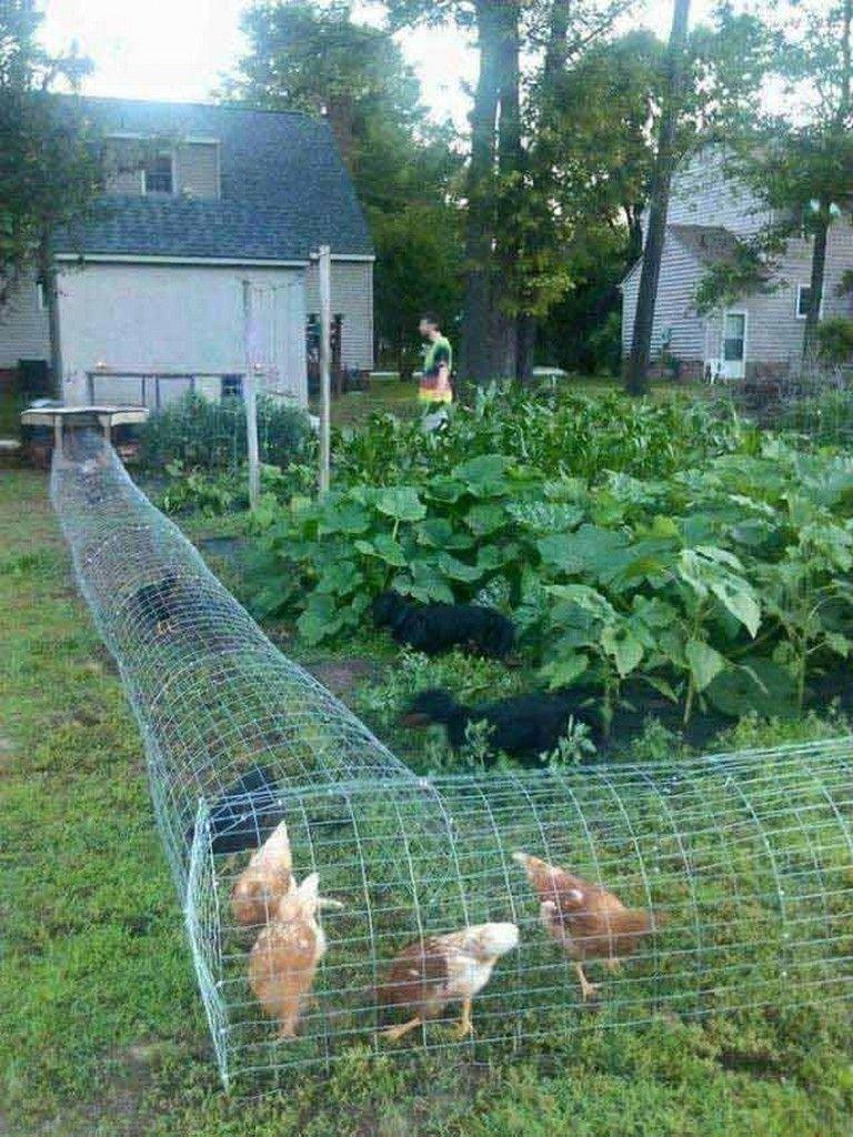 22 Low Budget Diy Backyard Chicken Coop Plans: 20+ Creative Low-Budget DIY Backyard Chicken Coop Plans #diyhomedecor #diygarden…