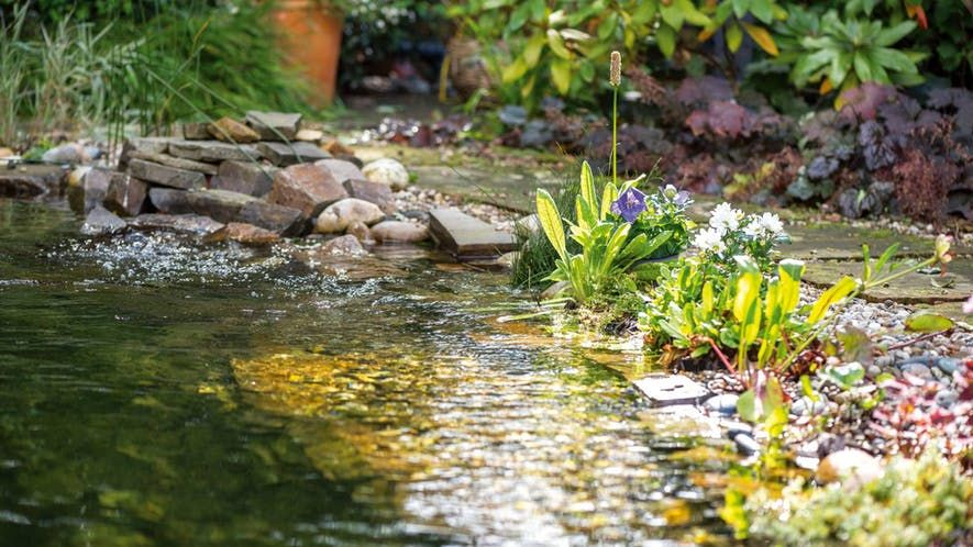 Gartengestaltung Ideen Tipps Fur Den Garten Obi Schwimmteich Anlegen Schwimmteich Teichpflanzen