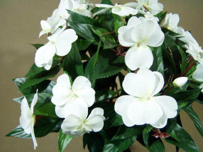 Niecierpek Garden Landscaping Plants Flowers