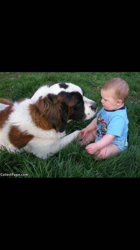 So Funny And Cute Just The Cutest Big Dogs Cute Big Dogs