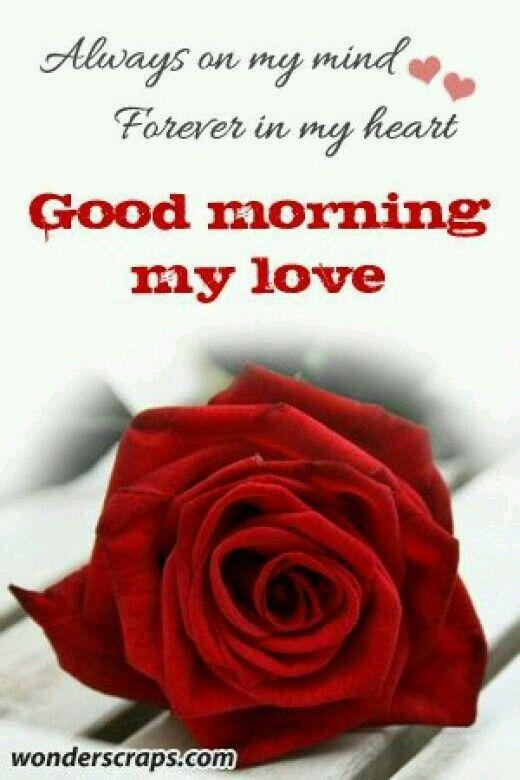 Good Morning My Love I Hope You Slept Well : Good morning my love i hope you slept well