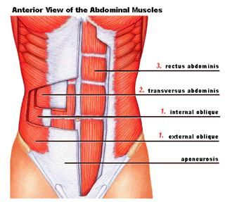 internal oblique exercises - Google Search | Abdominal ...