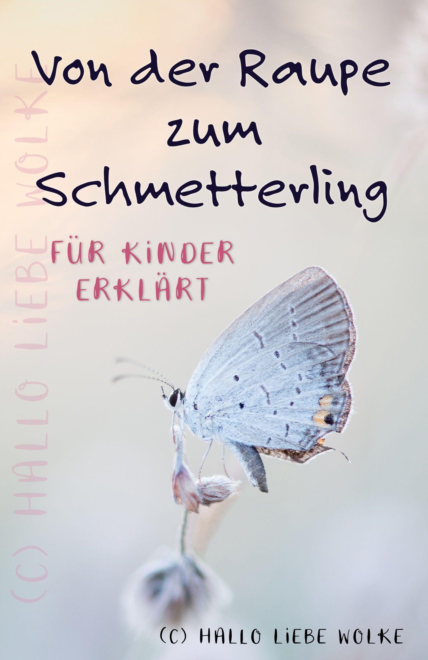 Von der Raupe zum Schmetterling. Eine Geschichte für Kinder.