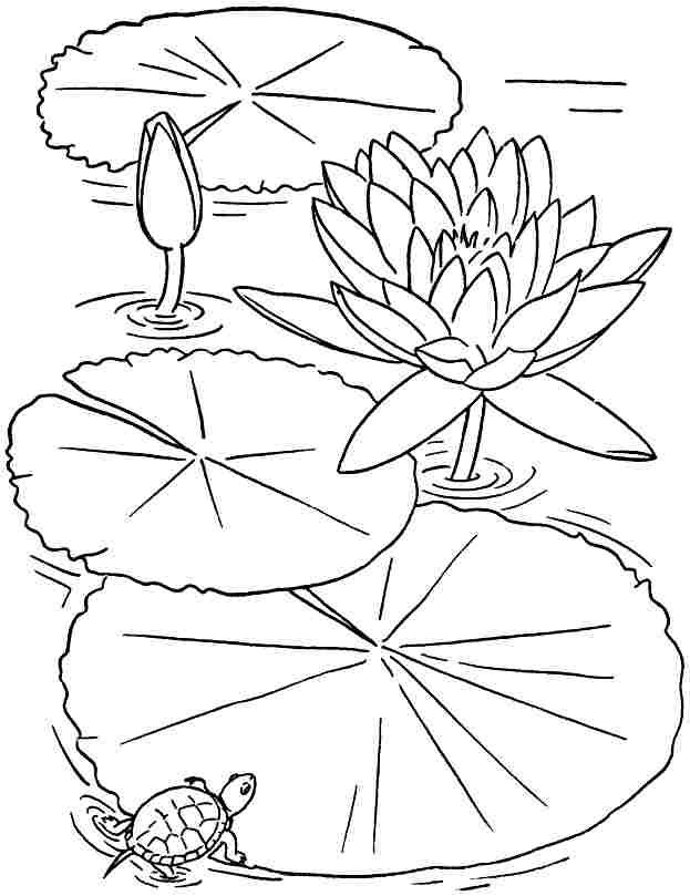 Free Colouring Sheets Lotus Flowers For Kids