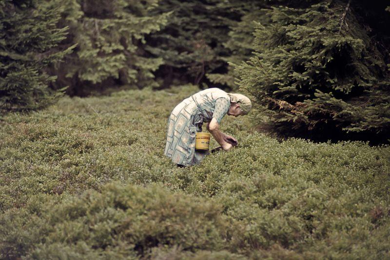 Im Bayerischen Wald - Diascan, irgendwann in den 1970er Jahren