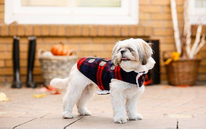 Bailey Bella Sherpa Lined Blanket Coat Food Animals Blanket Coat Pet Store
