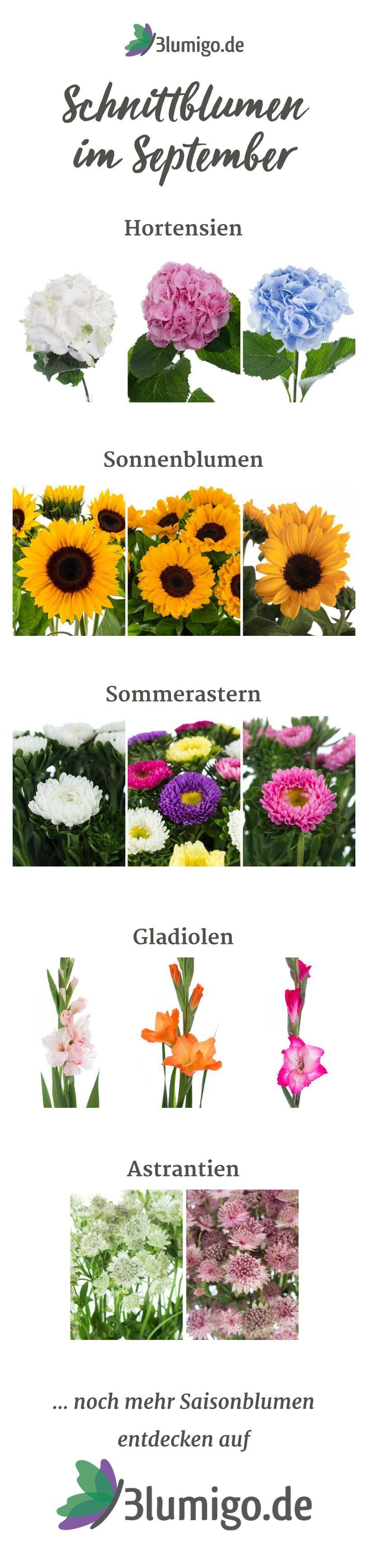 Welche Blumen gibt es im September Schnittblumen Saison