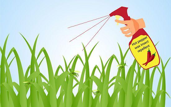 278e82b6e2835ed7618a37c2f47658b4 - How To Get Rid Of Grasshoppers On My Plants