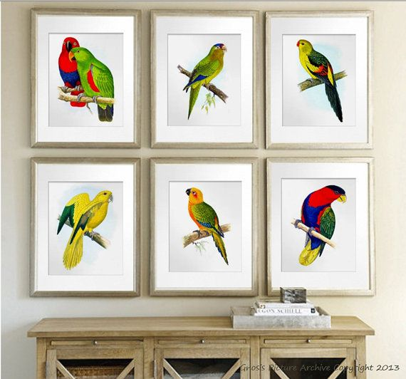Antique Bird Prints Tropical Art Decor Wall Set Of 6 Parrots Red Yellow Summer Birds Pictures 8x10 Gnosis