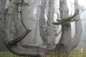 odd trees pictures - Google Search