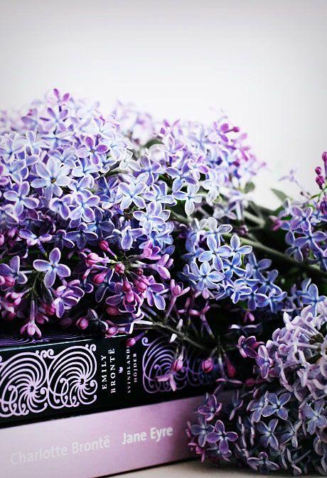 ZsaZsa Bellagio – Like No Other: lilac