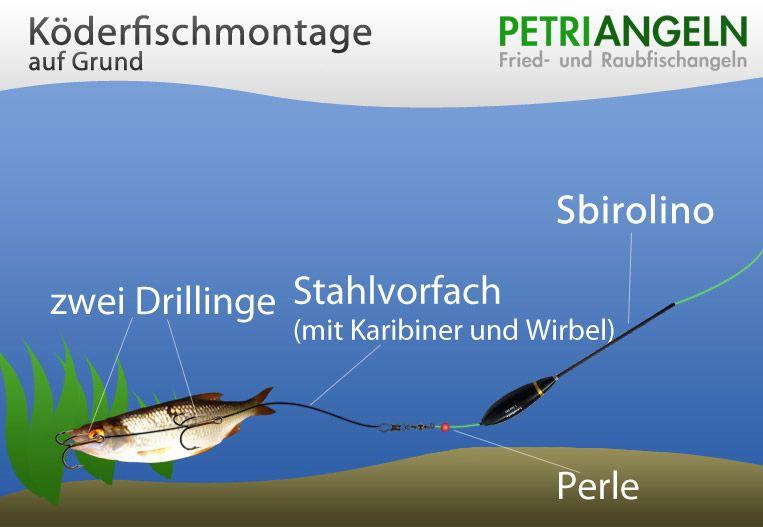Köderfischmontage auf Grund | Interessantes | Pinterest