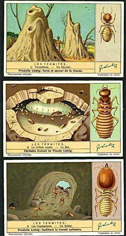 Por sus formas las conoceréis... #termitas #madera #plagas #insectos ...