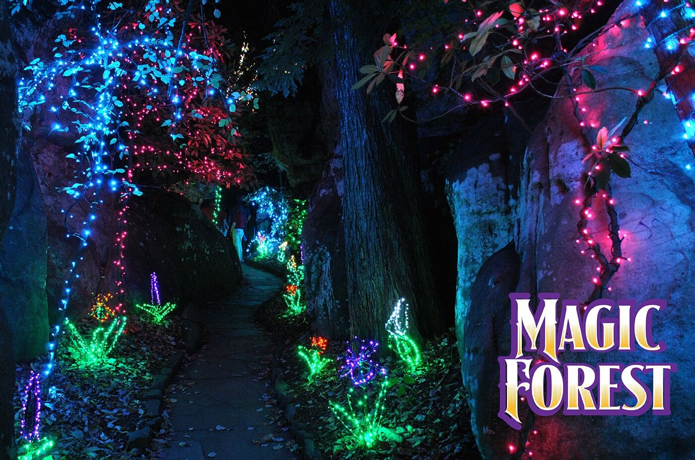 Rock City Enchanted Garden Of Light Pathway Magic Forest Garden Of Lights Enchanted Forest Christmas Light Show