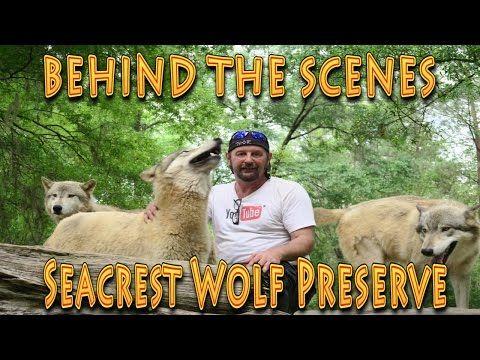 Florida Travel Pet the Wolves at Seacrest Wolf Preserve