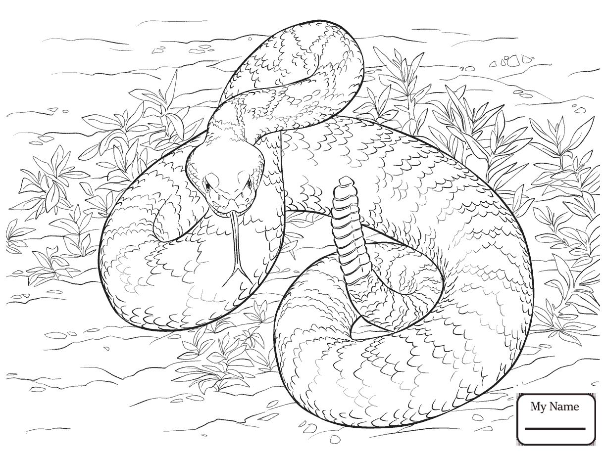 Western Diamondback Rattlesnake Coloring Pages Free
