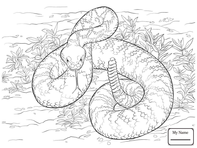 Western Diamondback Rattlesnake Coloring Pages Free