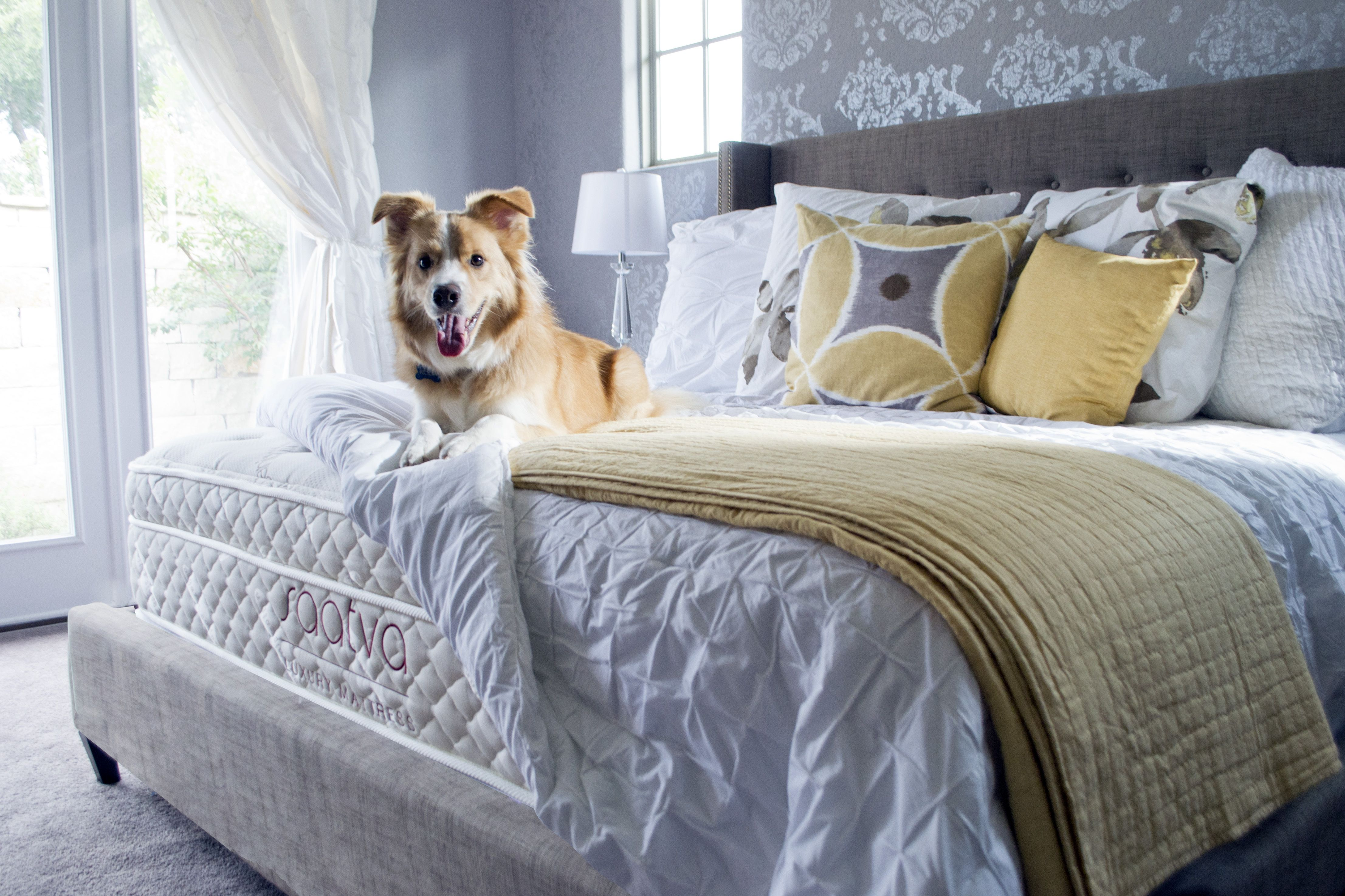in mattress top mattresses fresh columbus tags stores saatva ohio decoration photos ideas of firm photograph bed
