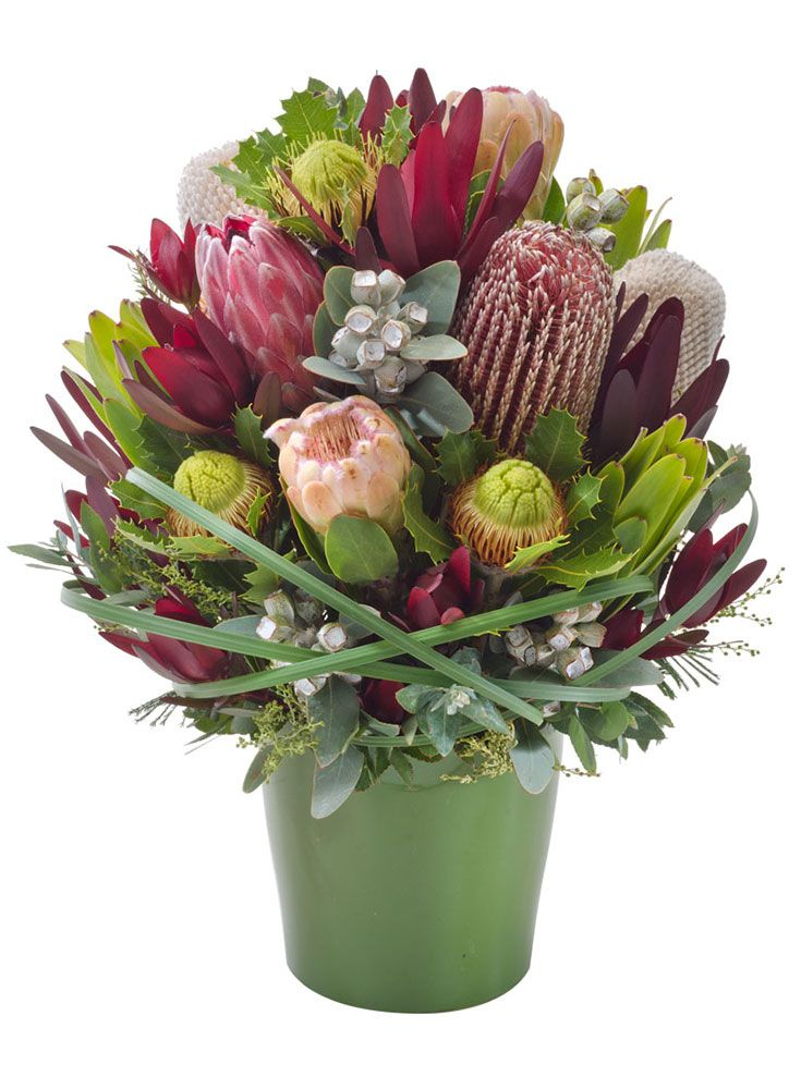 Banksia eucalyptus and tetragona nuts feature in our