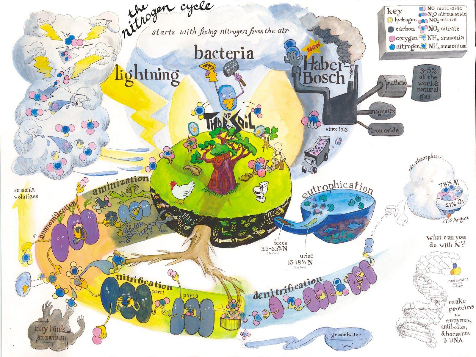 worksheet The Nitrogen Cycle Worksheet thenitrogencycle jpg environmental footprint infographic pinterest botany and ecology