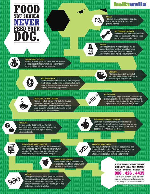 Food you should never feed your dog [Infographic]