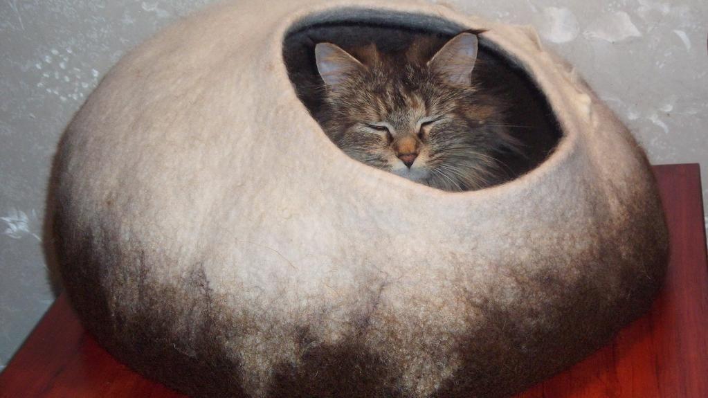 Katte hule i filt