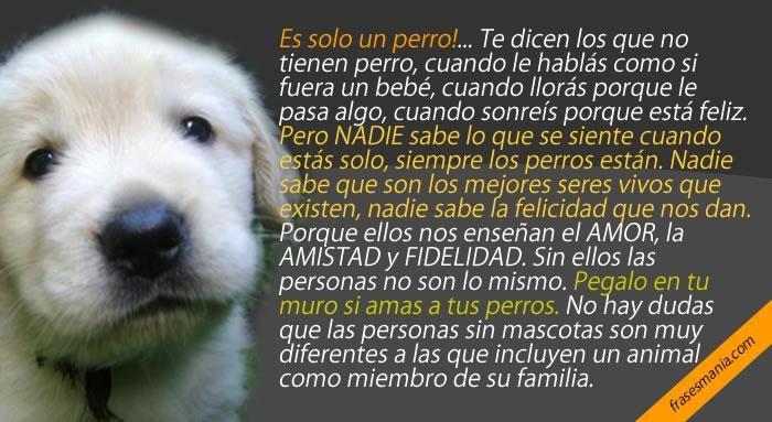 Frases De Facebook Perros Animales Perros Y Perros Frases