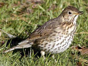 Vogels Nederland Tuin : Soorten vogels in de tuin tuin vogels dieren en