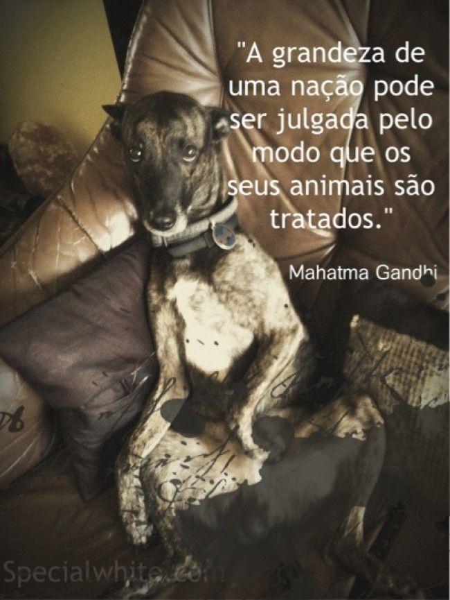 """""""A grandeza de uma nação pode ser julgada pelo modo que os seus animais são tratados""""    Autor: Mahatma Gandhi"""