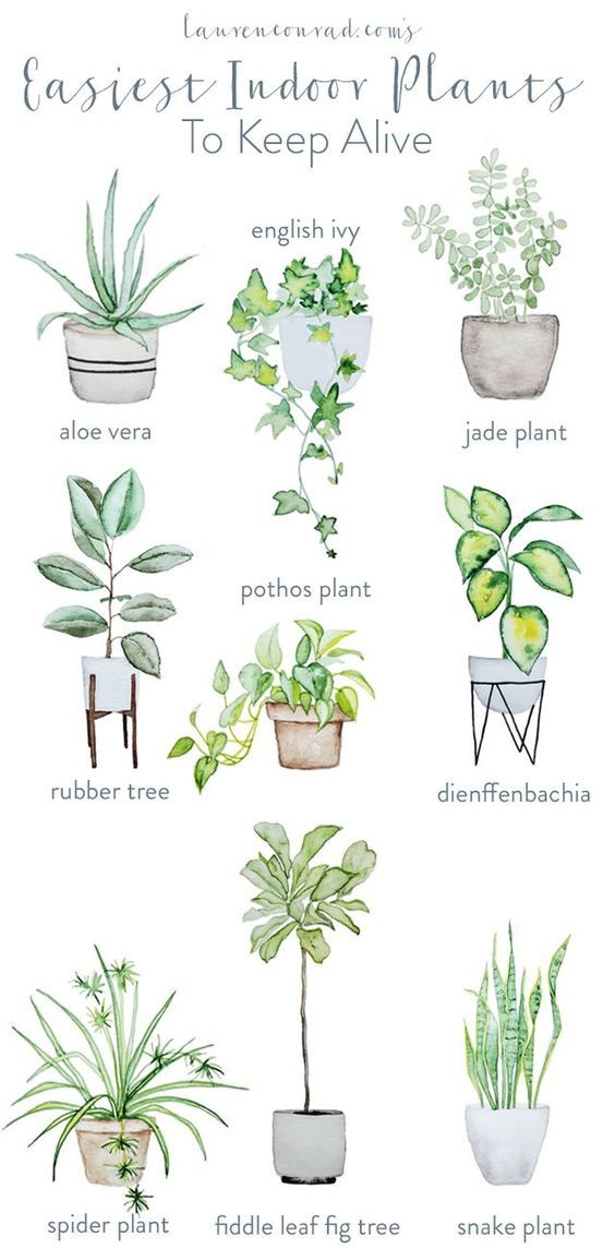 The Ultimate Houseplant Guide Hurd Honey Easy House Plants Home Indoor