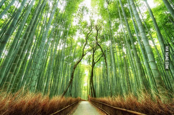 Foret De Bambous Japon Kyoto Fond Ecran Paysage Fond D Ecran Foret Foret De Bambou