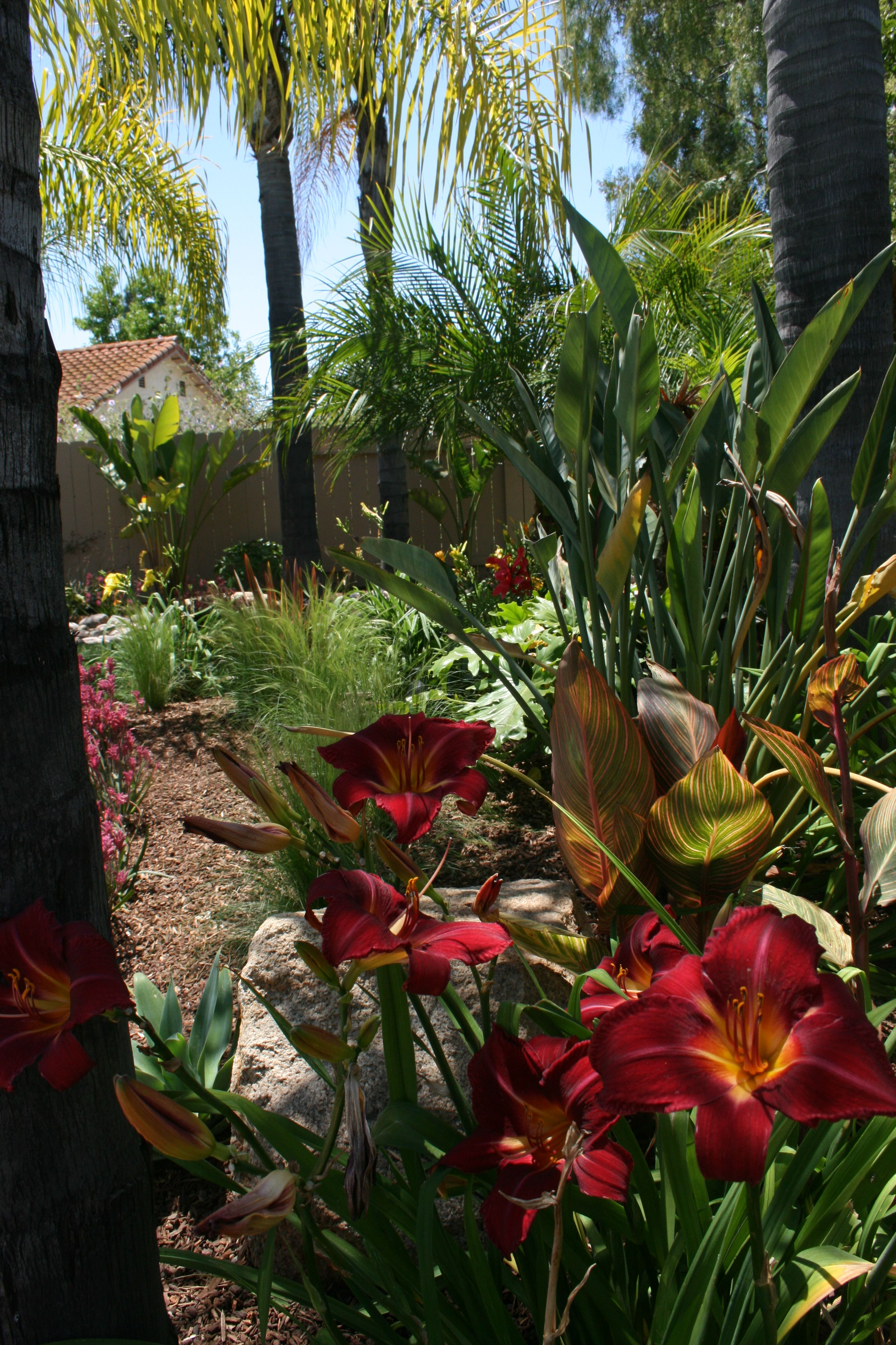 Daylilies that add a splash of color to any garden. | garden ideas ...