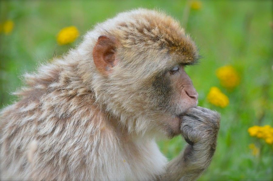 Photo The Thinker by Helle Lehd on 500px