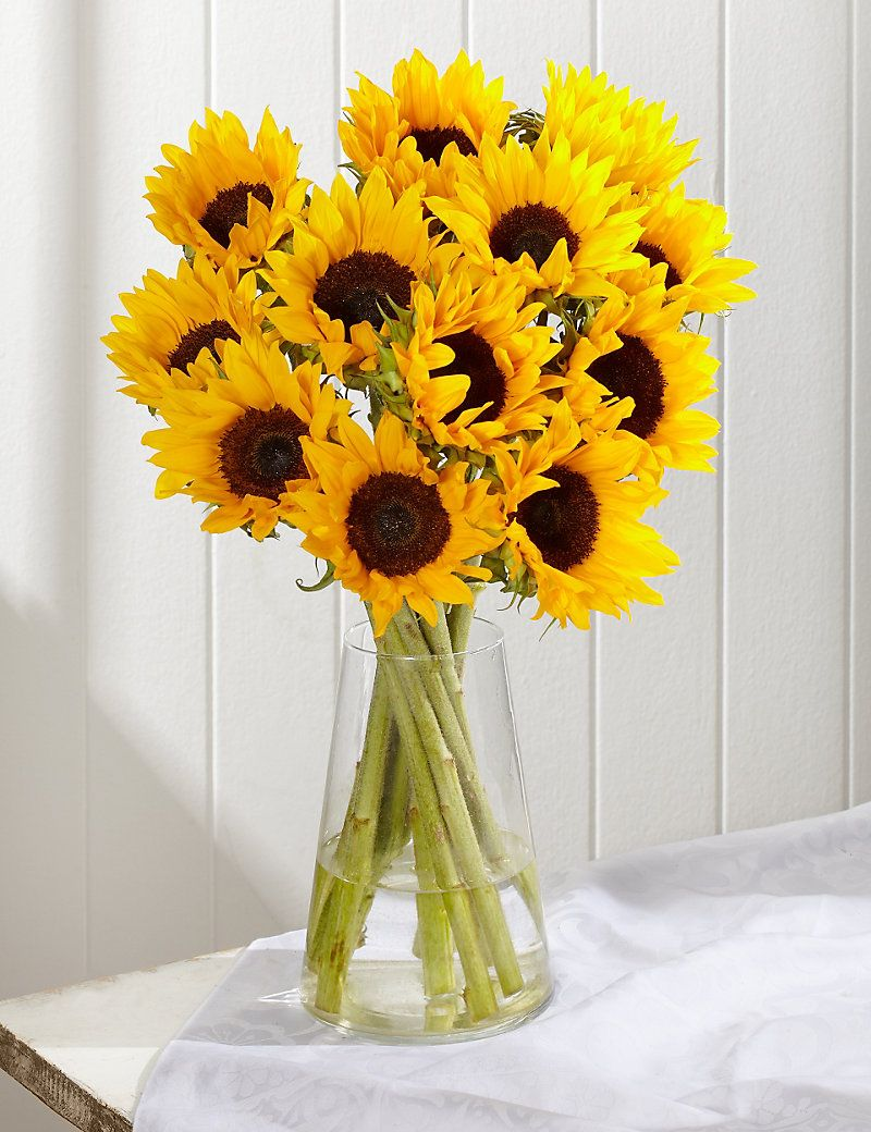 Sunflower abundance ms my favorite colour pinterest sunflower abundance ms izmirmasajfo