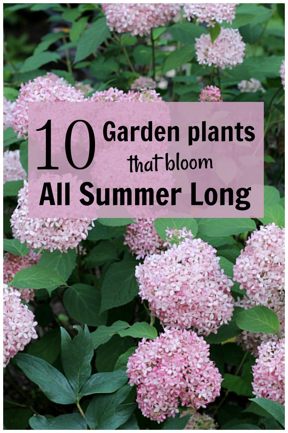 10+ Long Blooming Plants - Flowers from the Garden All Summer Long