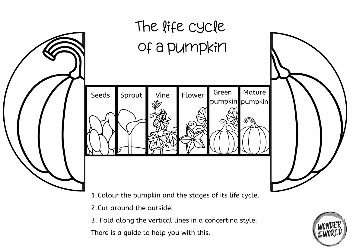 Life Cycle Of A Pumpkin Foldable Craft Teaching Resources Plant Life Cycle Life Cycles Plant Life Cycle Worksheet [ 828 x 1170 Pixel ]