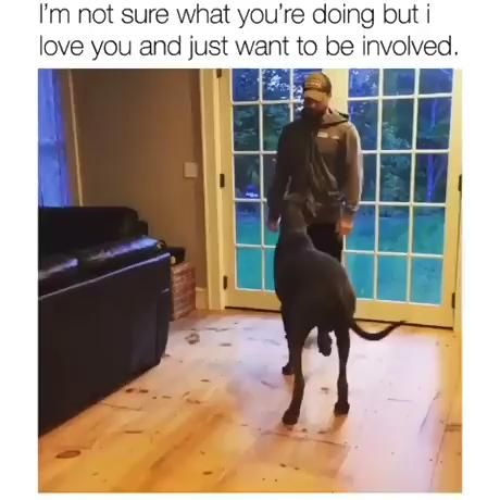 #This #dog's #attempt at #lunging