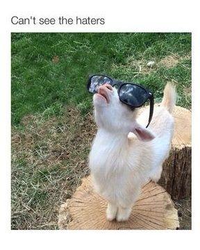 goat-haters-sunglasses