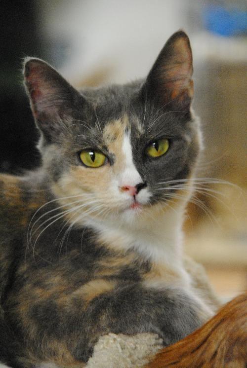 Joli Regard 3 3 Pretty Cats Beautiful Cats Kittens
