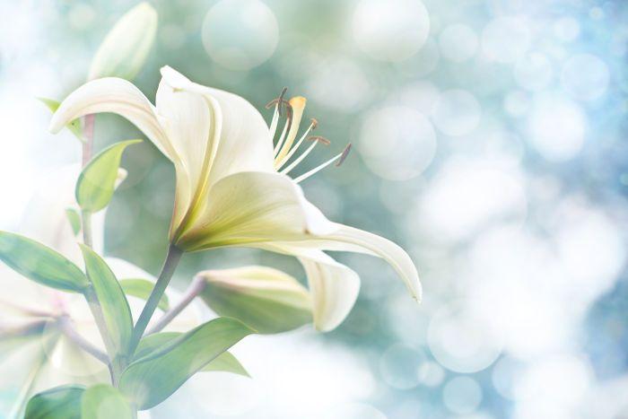 Lily flowers border designspring flowers flowers pinterest lily flowers border designspring flowers mightylinksfo