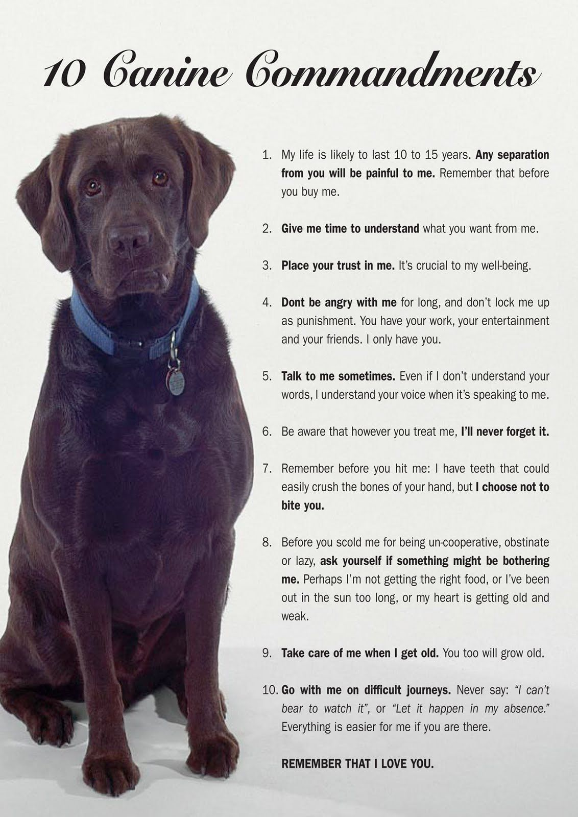 Canine commandments i literally started crying at number