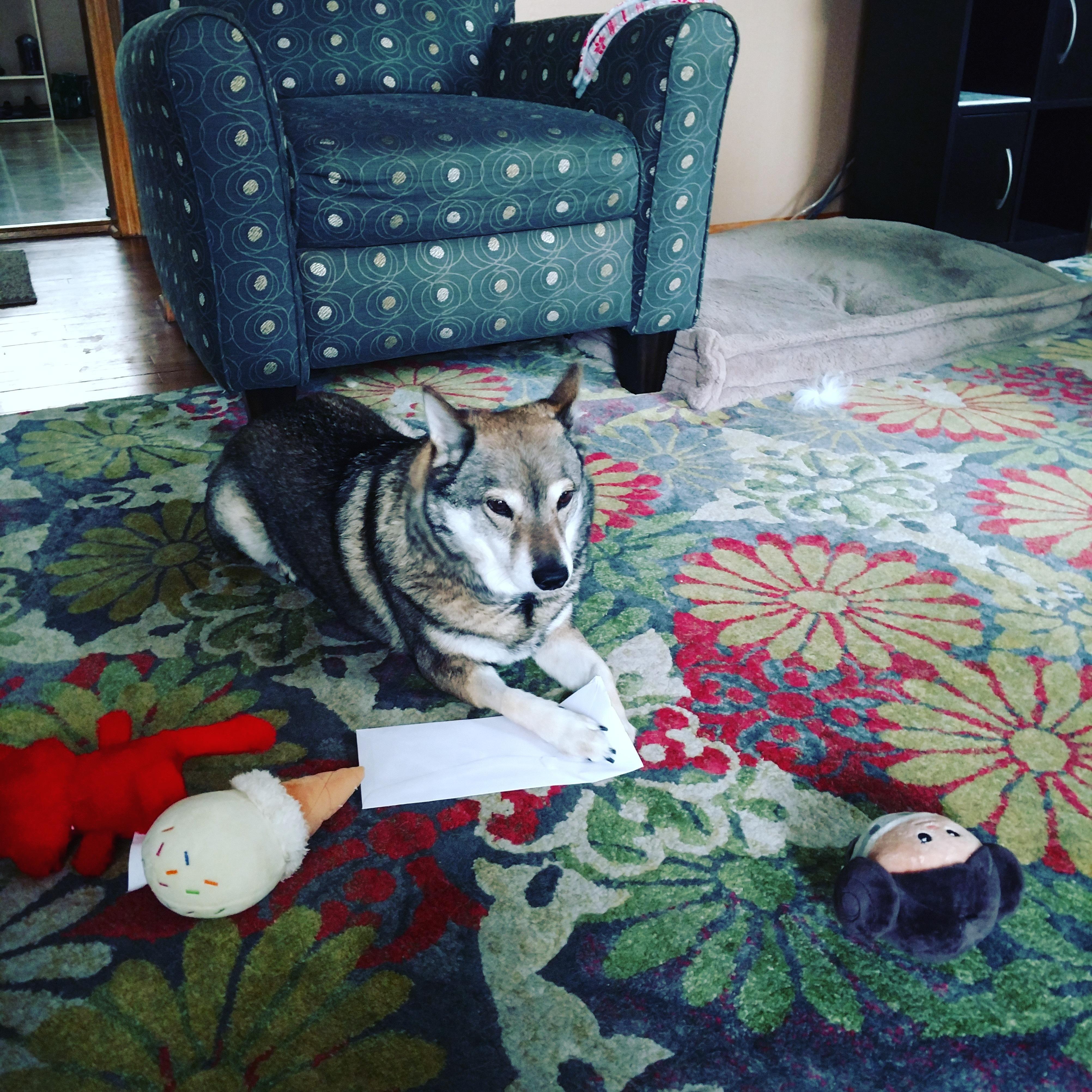 My dog got her insurance reimbursement letterhttpsi
