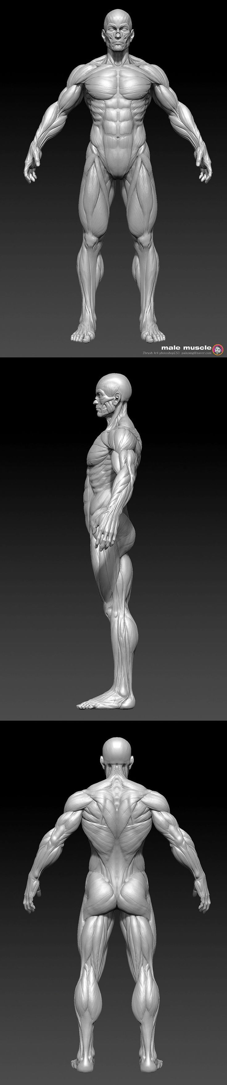 Human Anatomy 3D Sculpting Videos in Zbrush by Painzang Painzang is ...