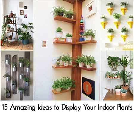 15 Amazing Ideas to Display Your Indoor Plants   Favorite Places ...