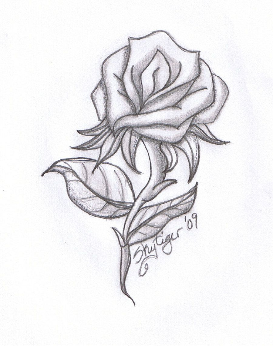 Cool pics to draw rose pencil drawing by skytiger for Cool drawings to draw in pencil
