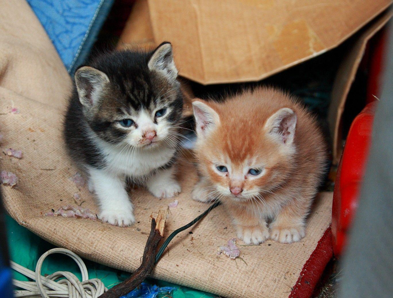 Cat Behavior Home Remedies Cats And Kittens Cat Care Cat Behavior