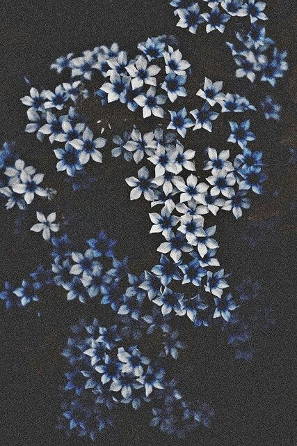 Pin By Rose Ivy On Beauty World Photo Flower Aesthetic Aesthetic Grunge Ravenclaw Aesthetic