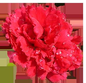 Flower Image Gallery Useful Floral Clip Art Flower
